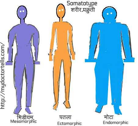 image showing three body types: mesomorphic, ectomorphic and endomorphic. The ectomorphic is slim and lean and wrongly believes that he is weak because of masturbation or nightfall.