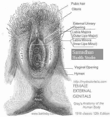 Top Sexologist for Female in Mumbai Samadhan Health Studio Dr. Ashok Koparday Female Reproductive System Picture