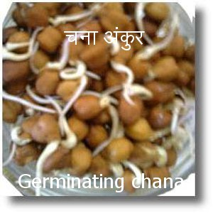 chana sprouts mung matki sprouts are useful in providing nutrients essential for metabolish of the body