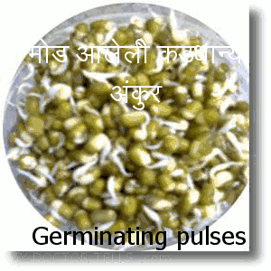 pulses, gram, dal, udad, tur are useful in providing proteins without oils.